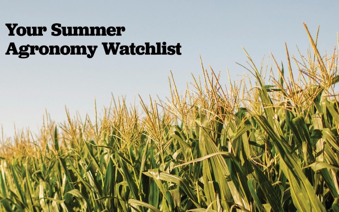 Summer Agronomy Watchlist